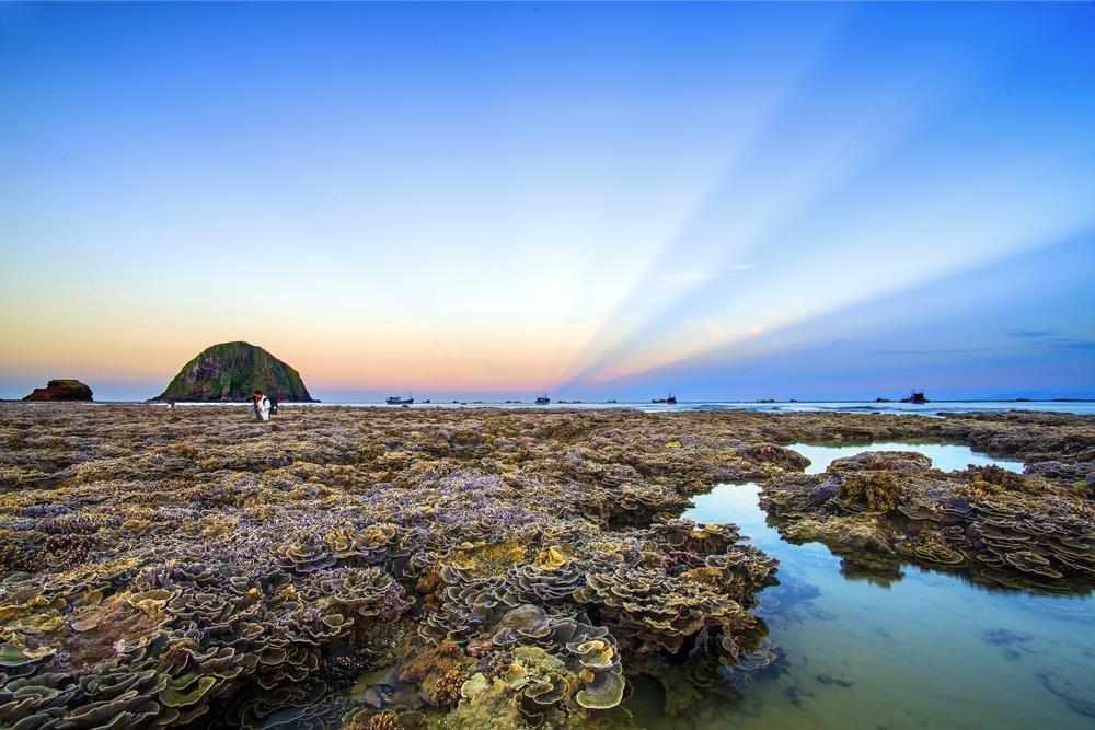 Không thể rời mắt trước vẻ đẹp lung linh của rạn san hô cạn Hòn Yến Ảnh 1