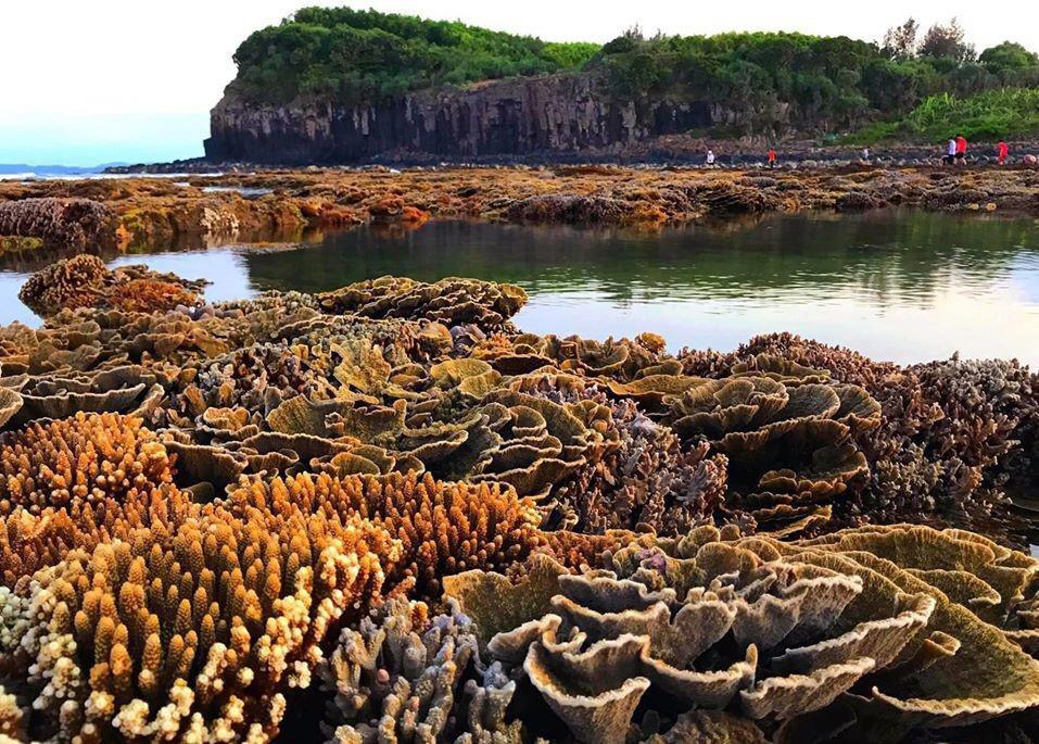 Không thể rời mắt trước vẻ đẹp lung linh của rạn san hô cạn Hòn Yến Ảnh 12
