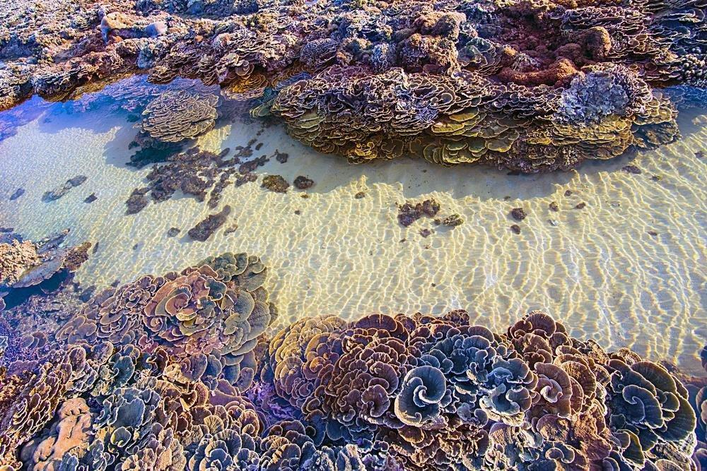 Không thể rời mắt trước vẻ đẹp lung linh của rạn san hô cạn Hòn Yến Ảnh 2