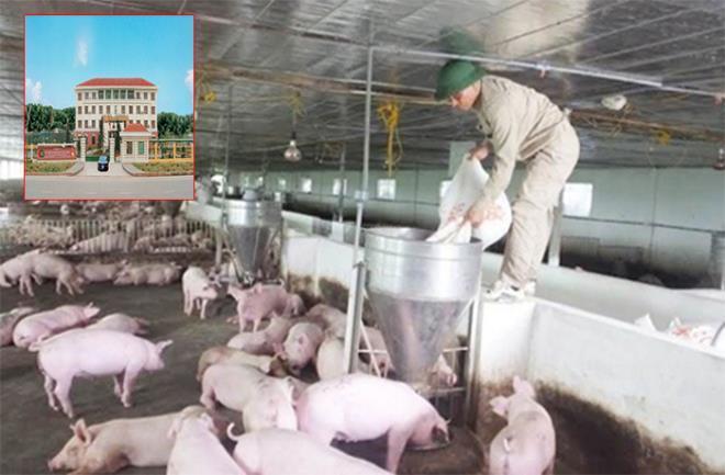 Giá lợn cao chót vót, doanh nghiệp bán thịt lãi hơn 700 tỷ đồng Ảnh 1
