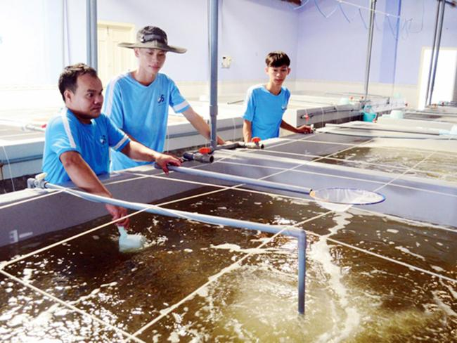 Ninh Thuận tăng giá trị sản xuất thủy sản Ảnh 1