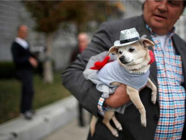 Được bầu làm 'thị trưởng' ở Mỹ, chú chó trở thành idol trên MXH Ảnh 8