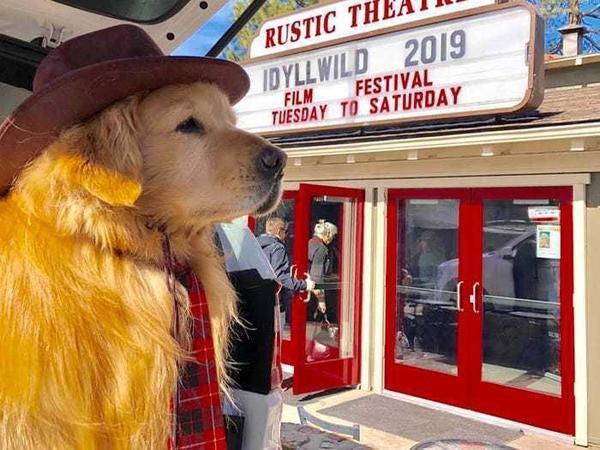 Được bầu làm 'thị trưởng' ở Mỹ, chú chó trở thành idol trên MXH Ảnh 5