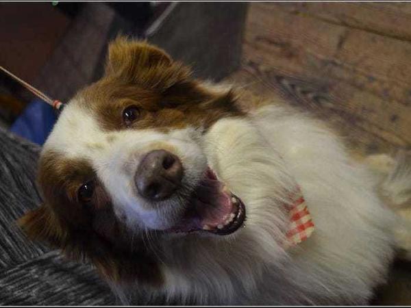 Được bầu làm 'thị trưởng' ở Mỹ, chú chó trở thành idol trên MXH Ảnh 3