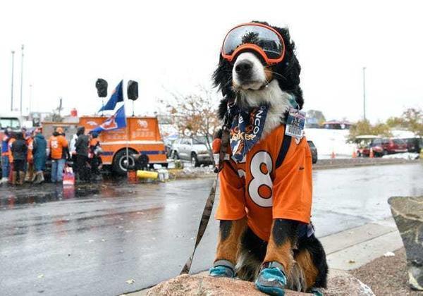 Được bầu làm 'thị trưởng' ở Mỹ, chú chó trở thành idol trên MXH Ảnh 10