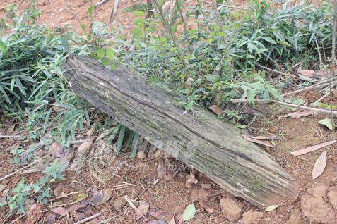 Nghĩa địa bí ẩn chôn những người bị hổ vồ bên sông Mã Ảnh 3