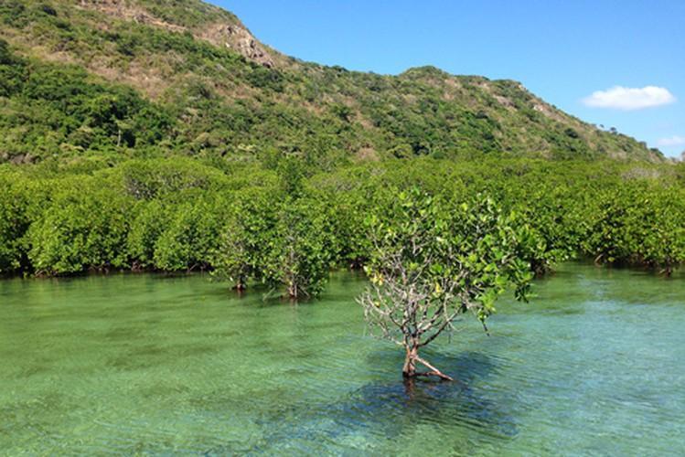 Khám phá mũi Tàu Bể bí ẩn ở Côn Đảo Ảnh 4