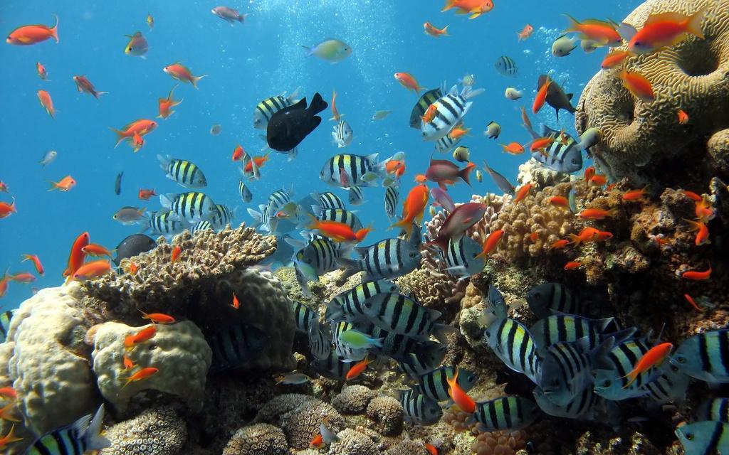 Trải nghiệm lặn biển ngắm san hô ở đảo Cù Lao Chàm Ảnh 3
