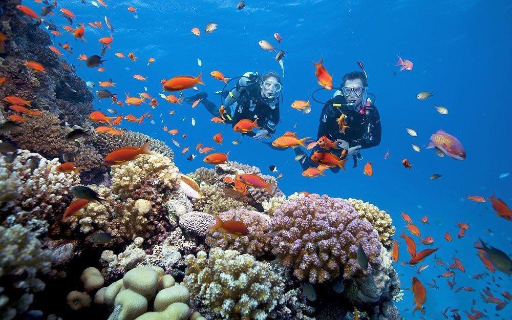 Trải nghiệm lặn biển ngắm san hô ở đảo Cù Lao Chàm Ảnh 5