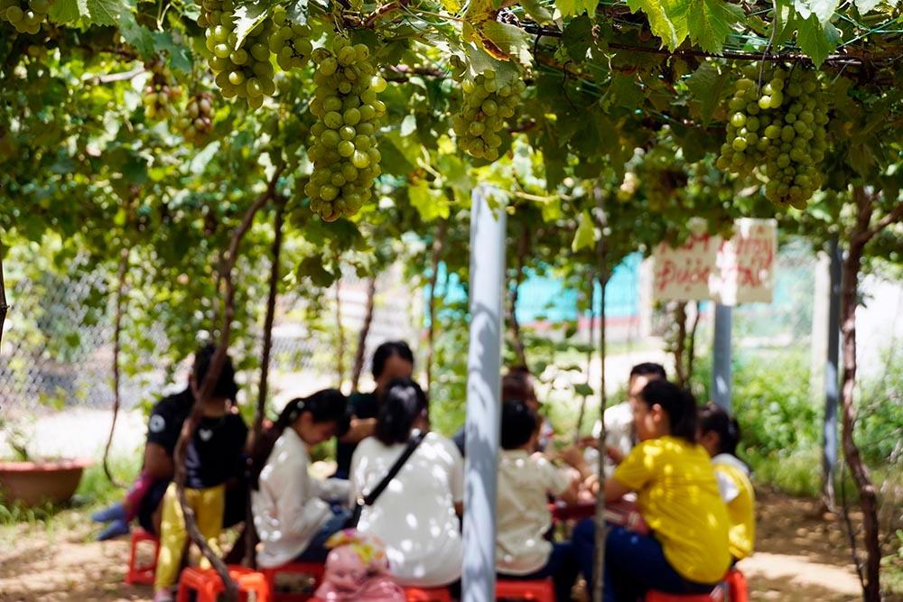 Vườn nho siêu trái ở miền Tây mở cửa miễn phí, giới trẻ thích thú đến check-in Ảnh 13