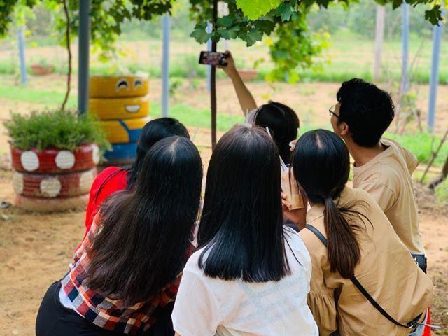 Vườn nho siêu trái ở miền Tây mở cửa miễn phí, giới trẻ thích thú đến check-in Ảnh 3