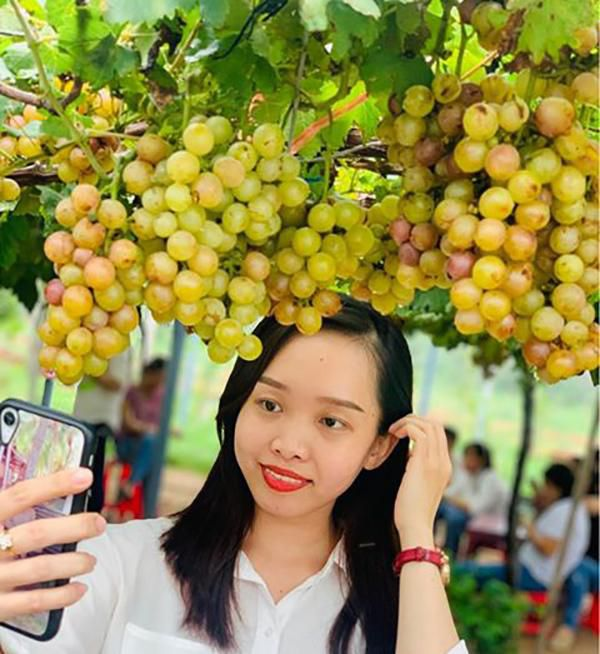 Vườn nho siêu trái ở miền Tây mở cửa miễn phí, giới trẻ thích thú đến check-in Ảnh 6