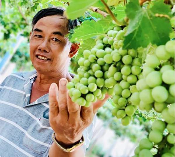 Vườn nho siêu trái ở miền Tây mở cửa miễn phí, giới trẻ thích thú đến check-in Ảnh 16