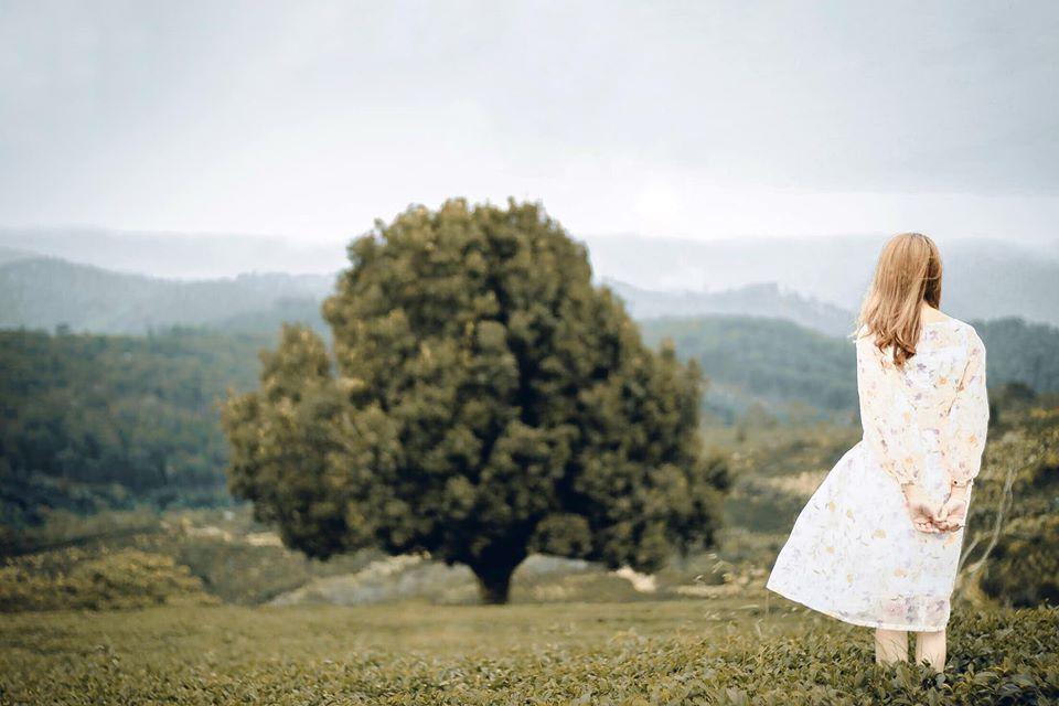 Dân tình đổ xô check-in cây thông 'mập ú' nhất Đà Lạt, chơi vơi giữa mây trời thơ mộng biết bao, nghe đồn 'khi đi lẻ bóng khi về có đôi'! Ảnh 6