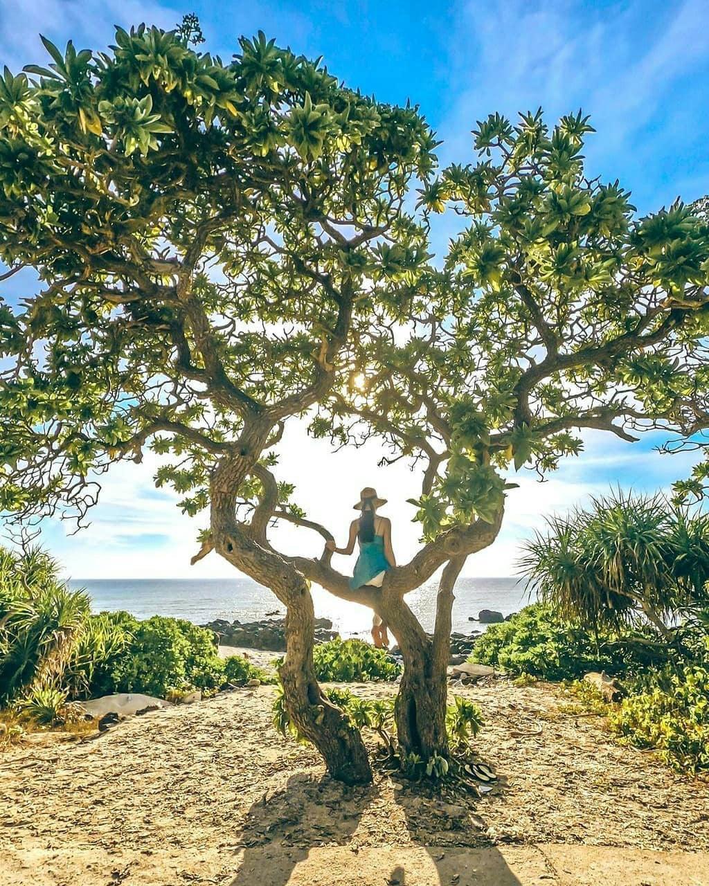 Hè này lập kèo vi vu 4 đảo cù lao tuyệt đẹp ở miền Trung Ảnh 6