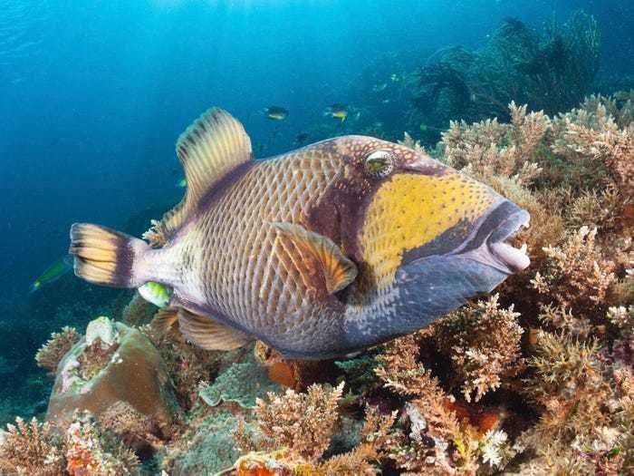 Sự thật loài cá có răng trắng đều tăm tắp như con người gây bão mạng xã hội Ảnh 4