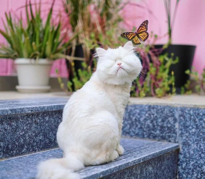 Em mèo mù xinh đẹp này chính là bằng chứng cho sức mạnh của tình yêu thương Ảnh 1