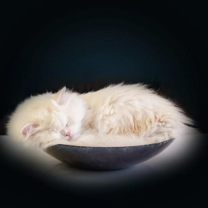 Em mèo mù xinh đẹp này chính là bằng chứng cho sức mạnh của tình yêu thương Ảnh 4
