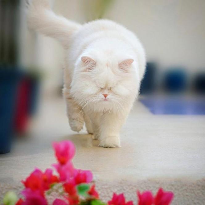 Em mèo mù xinh đẹp này chính là bằng chứng cho sức mạnh của tình yêu thương Ảnh 2