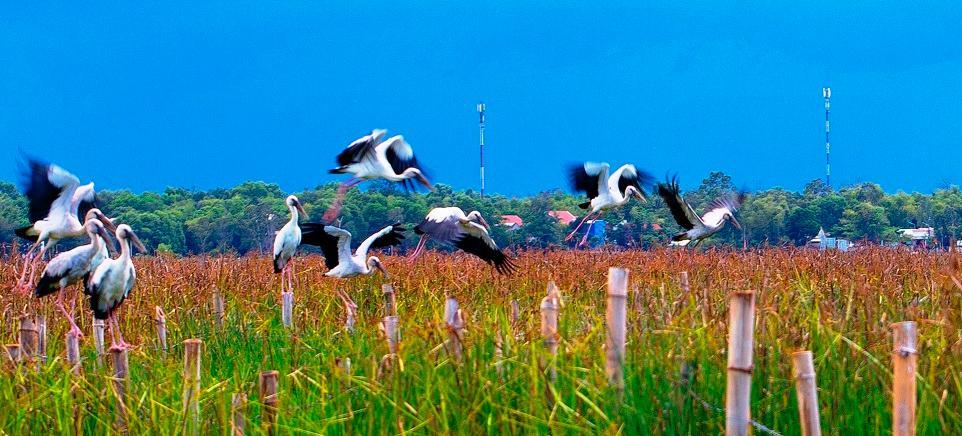 Chim cò di cư đậu kín sông Đầm Ảnh 8