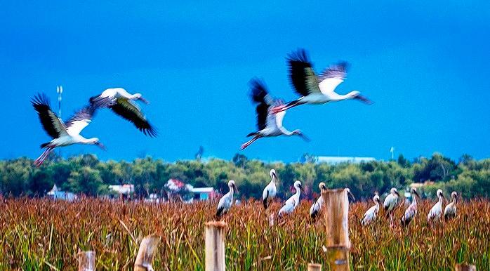 Chim cò di cư đậu kín sông Đầm Ảnh 7