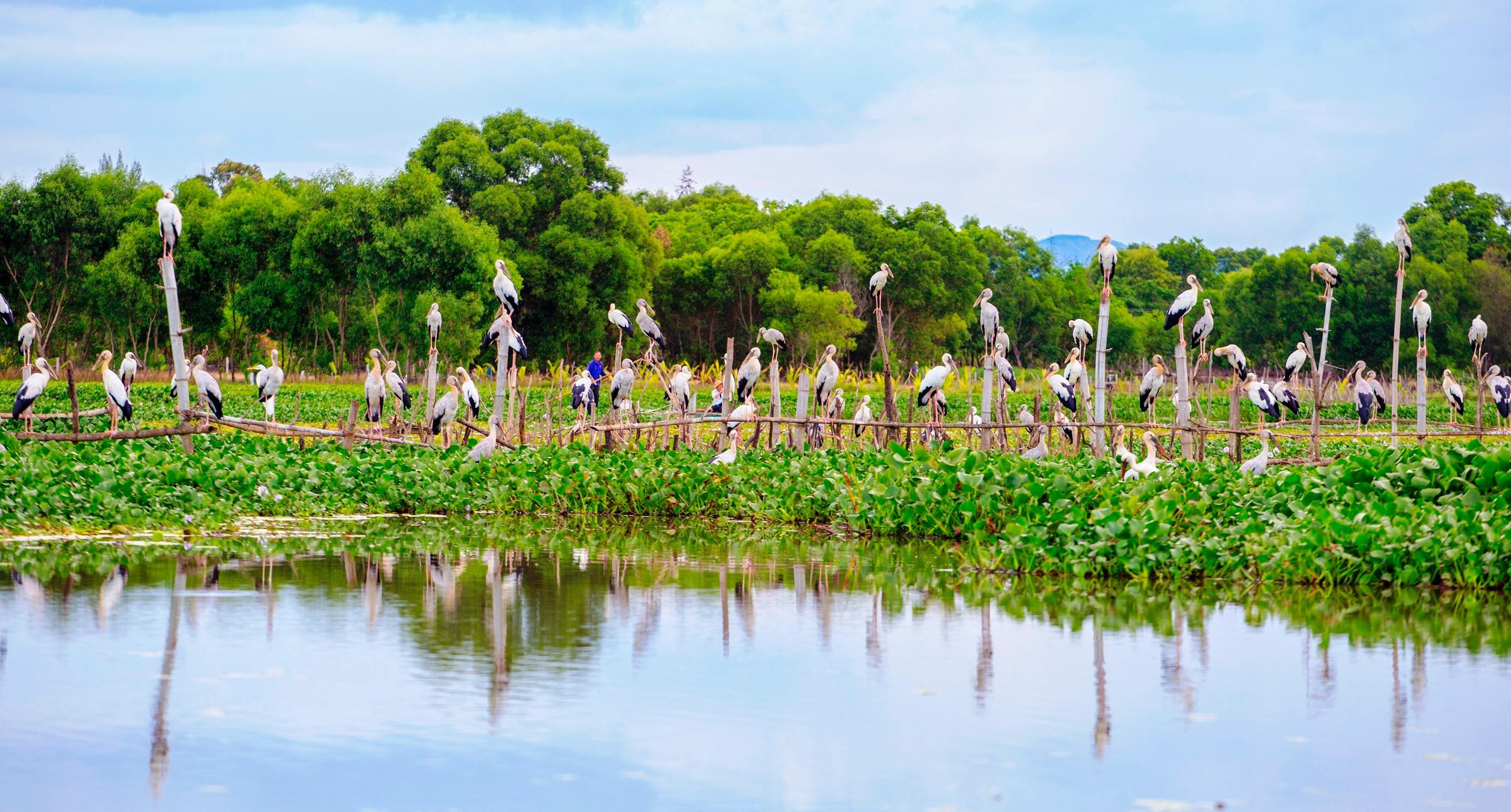 Chim cò di cư đậu kín sông Đầm Ảnh 3