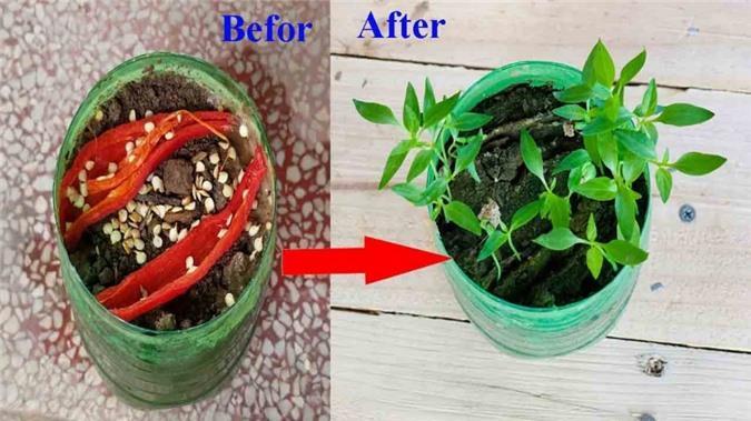 Điểm danh 6 loại rau trồng trong nhà cũng sống, chỉ vài ngày là có ngay rau sạch ăn quanh năm Ảnh 1