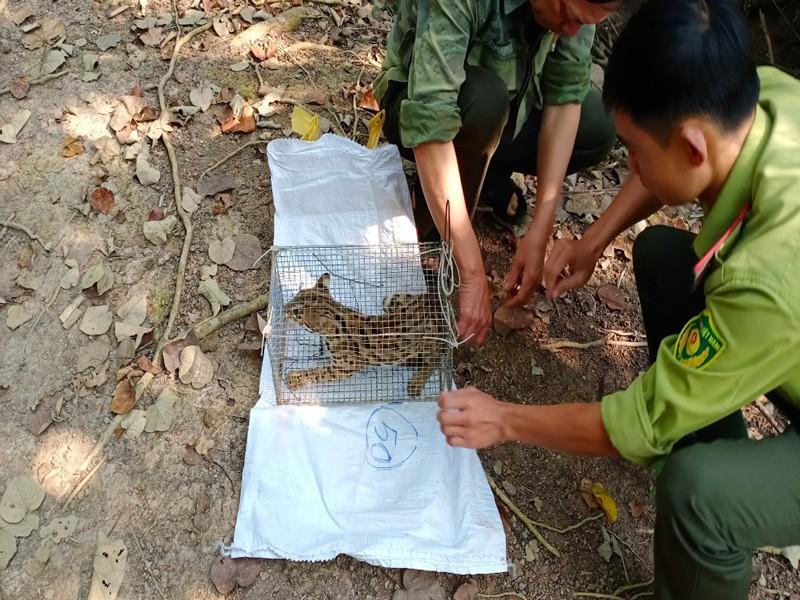 Bàn giao cá thể tê tê, khỉ, mèo rừng quý hiếm về khu bảo tồn Ảnh 3