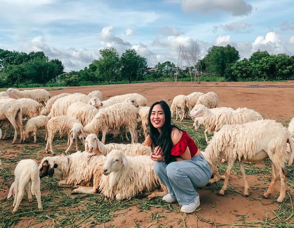 Lạc vào miền quê châu Âu tại 4 đồng cừu Việt Nam Ảnh 8