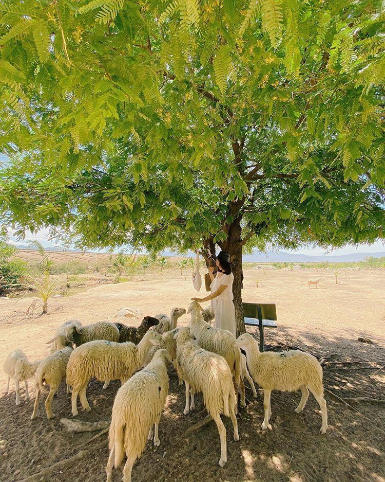 Lạc vào miền quê châu Âu tại 4 đồng cừu Việt Nam Ảnh 1