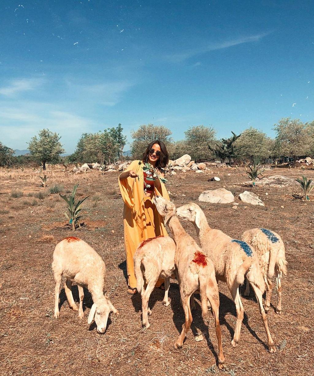 Lạc vào miền quê châu Âu tại 4 đồng cừu Việt Nam Ảnh 3
