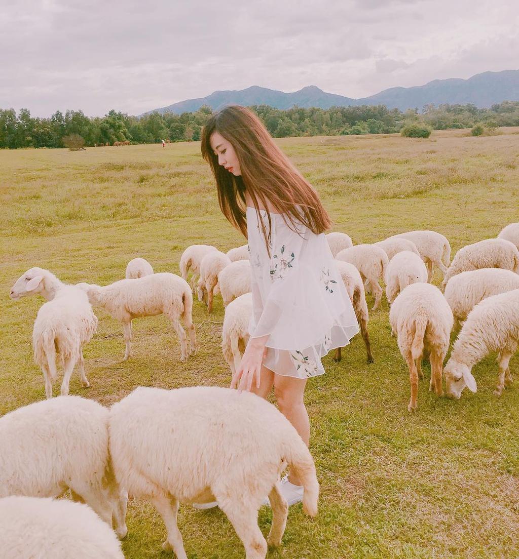 Lạc vào miền quê châu Âu tại 4 đồng cừu Việt Nam Ảnh 10