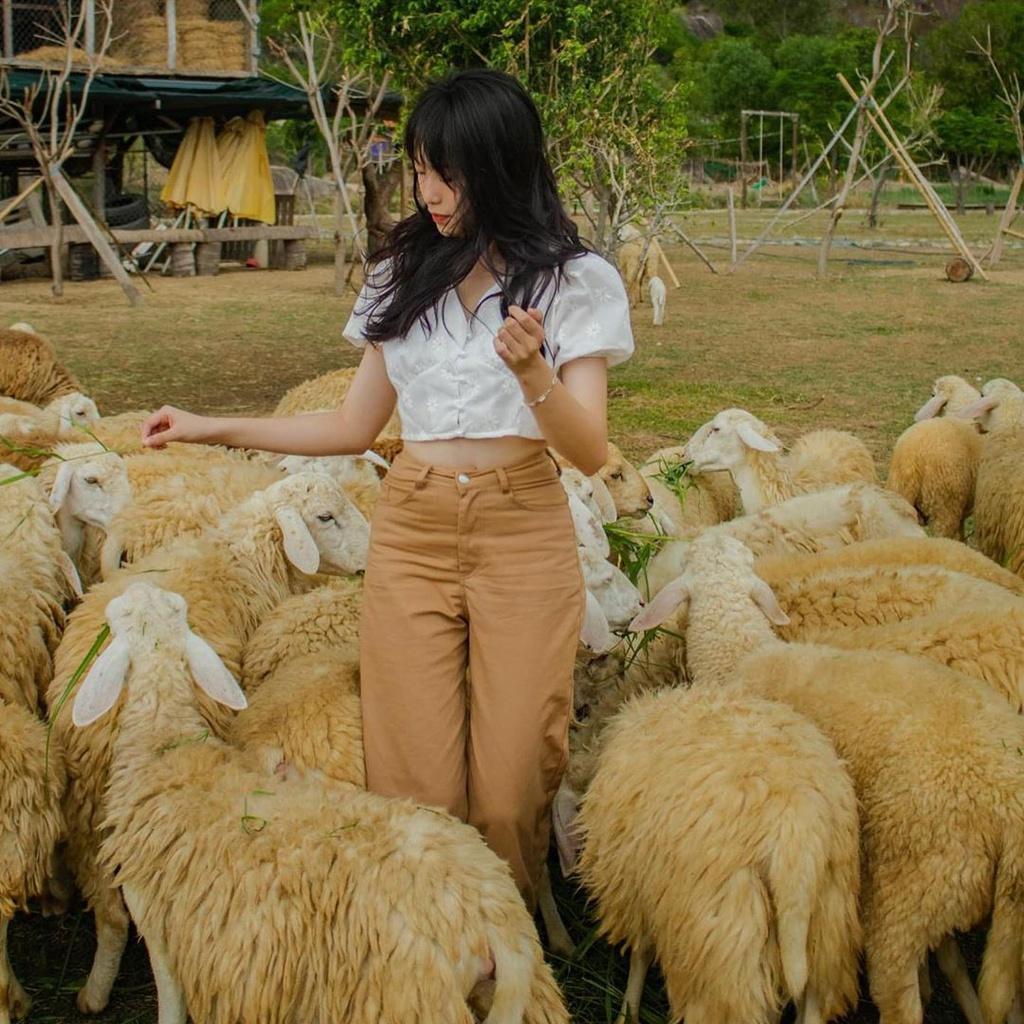 Lạc vào miền quê châu Âu tại 4 đồng cừu Việt Nam Ảnh 5