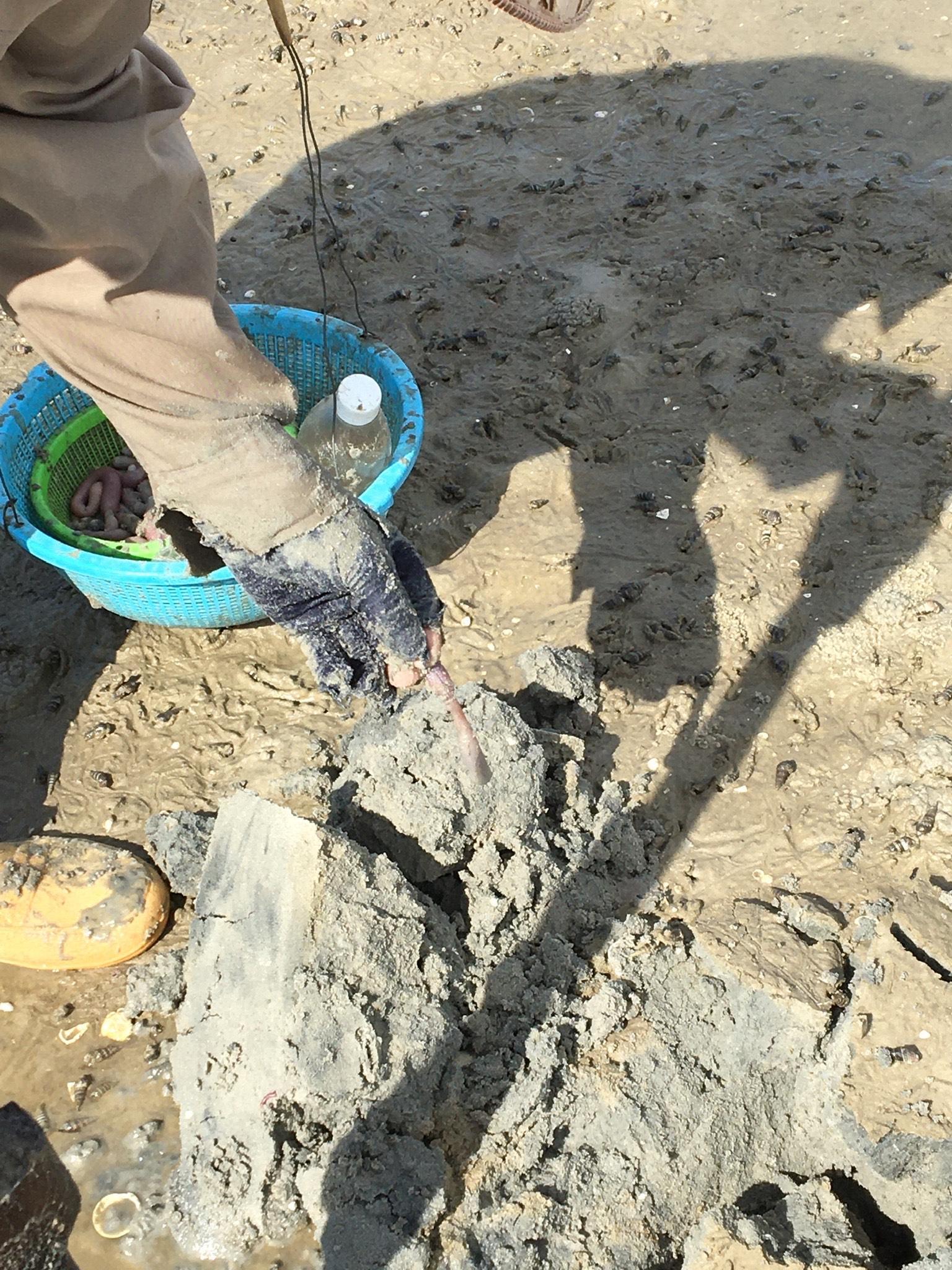 Nghề 'đào mồi' trên bãi bồi Quan Lạn Ảnh 2