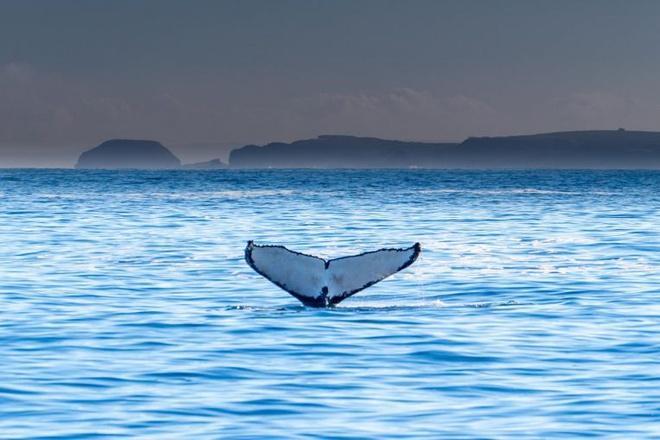 Du khách bị thương nặng vì bị cá voi quẫy đuôi vào người Ảnh 1