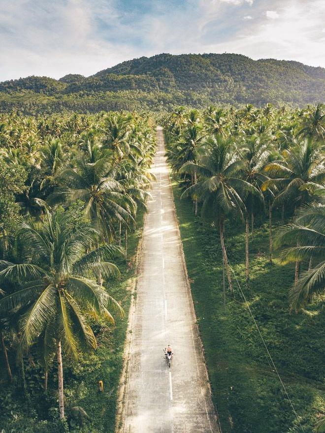 Đường xuyên rừng dừa hút khách vì thẳng như kẻ chỉ Ảnh 4