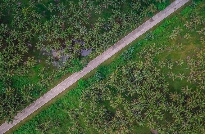 Đường xuyên rừng dừa hút khách vì thẳng như kẻ chỉ Ảnh 5