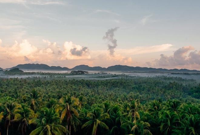 Đường xuyên rừng dừa hút khách vì thẳng như kẻ chỉ Ảnh 3