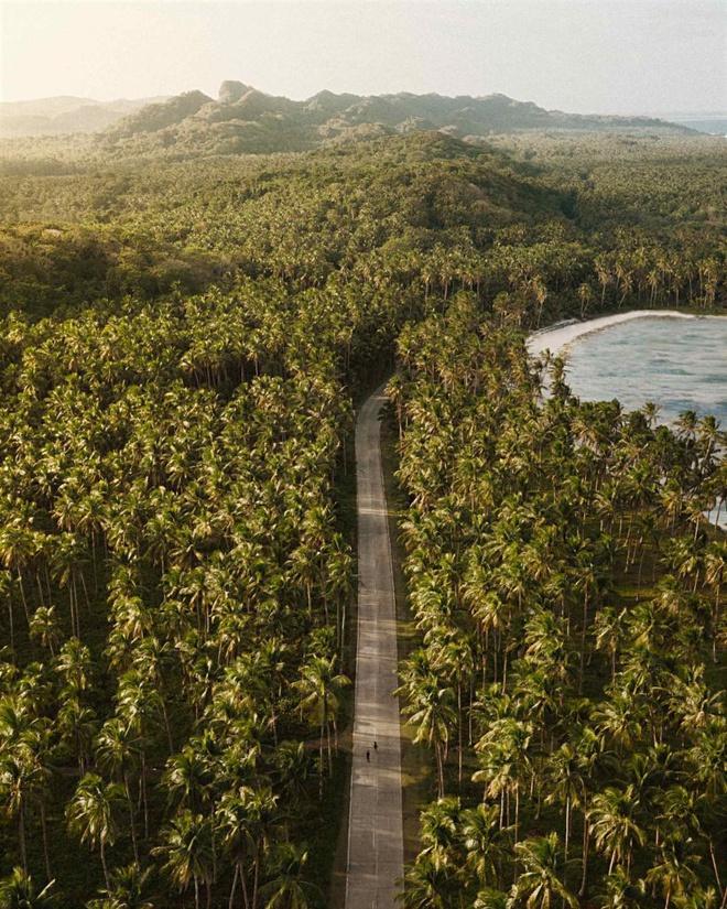 Đường xuyên rừng dừa hút khách vì thẳng như kẻ chỉ Ảnh 8