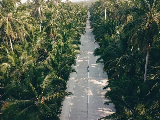 Đường xuyên rừng dừa hút khách vì thẳng như kẻ chỉ Ảnh 6