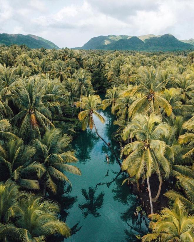 Đường xuyên rừng dừa hút khách vì thẳng như kẻ chỉ Ảnh 9