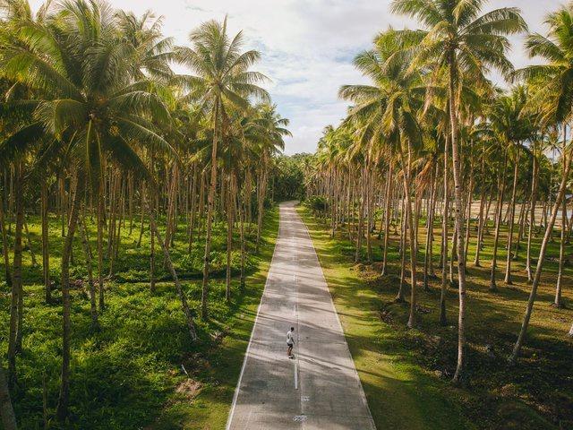 Đường xuyên rừng dừa hút khách vì thẳng như kẻ chỉ Ảnh 7