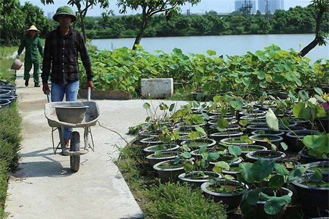 Đến thăm nơi bảo tồn các loài sen quý hiếm nhất của Việt Nam Ảnh 5