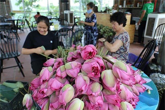 Đến thăm nơi bảo tồn các loài sen quý hiếm nhất của Việt Nam Ảnh 11