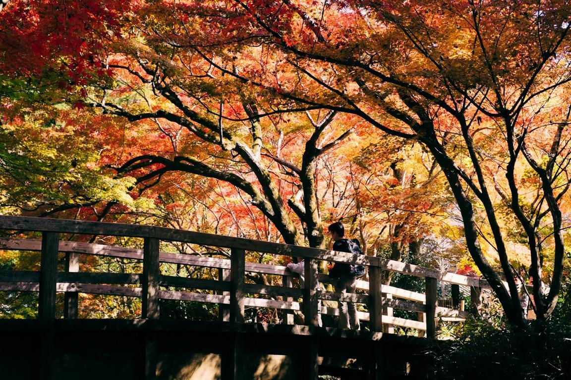 Yufuin, ngôi làng cổ tích ở Nhật Bản Ảnh 25