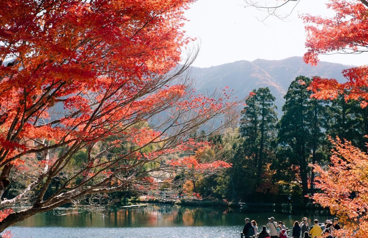 Yufuin, ngôi làng cổ tích ở Nhật Bản Ảnh 23
