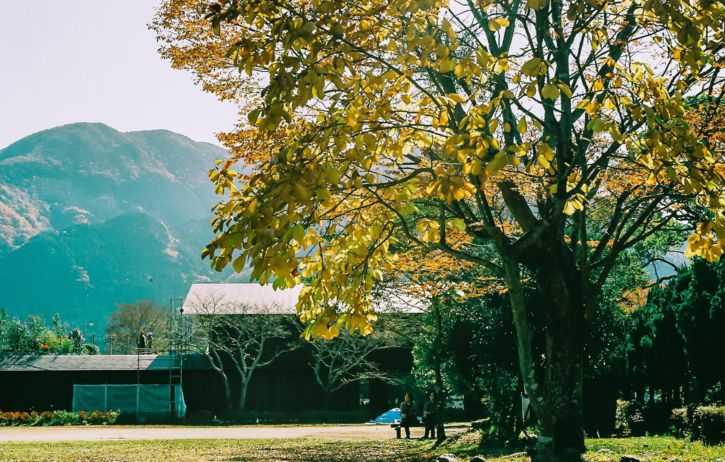 Yufuin, ngôi làng cổ tích ở Nhật Bản Ảnh 20