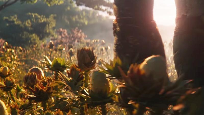 Dưa chuột mọc sừng - loại quả như tới từ hành tinh khác Ảnh 11