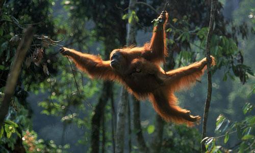 Top 10 động vật có nguy cơ biến mất mãi mãi Ảnh 1