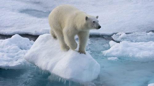 Top 10 động vật có nguy cơ biến mất mãi mãi Ảnh 2